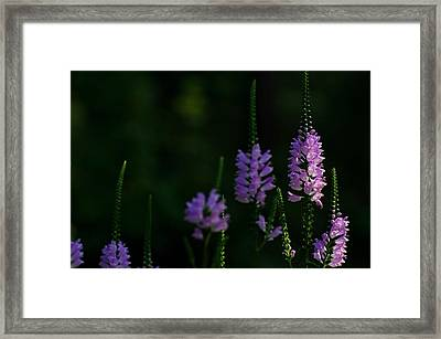 An Obedient Gathering  Framed Print