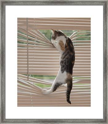 Ana Lucia Levelor Framed Print by Elizabeth Sullivan