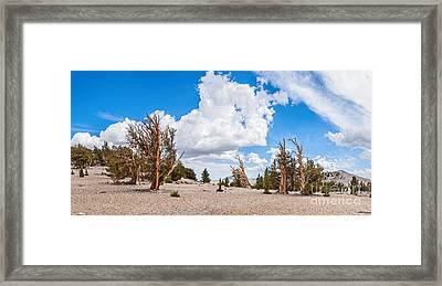 Ancient Panorama - Bristlecone Pine Forest Framed Print by Jamie Pham