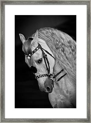 Andalusian Framed Print by Wes and Dotty Weber