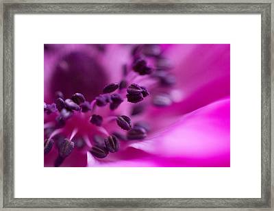 Anemone Framed Print by Cathy Donohoue