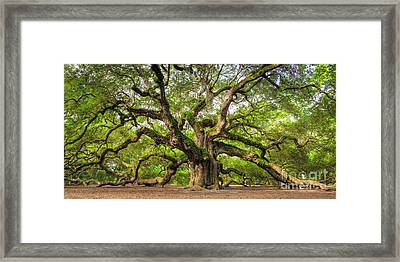 Angel Oak Tree Of Life Framed Print