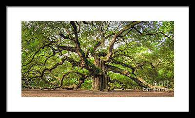 Oak Island Framed Prints