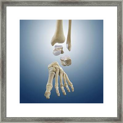 Ankle Joint Anatomy Framed Print