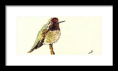 Annas Hummingbirds Framed Prints