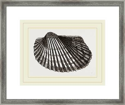 Antique Arca Framed Print by Litz Collection