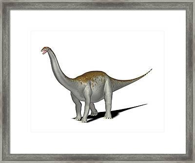 Apatosaurus Dinosaur Framed Print by Friedrich Saurer