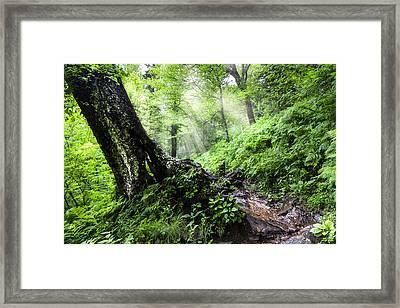Appalachian Trail Framed Print by Debra and Dave Vanderlaan