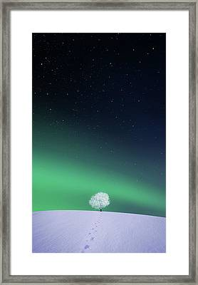 Apple Framed Print by Bess Hamiti