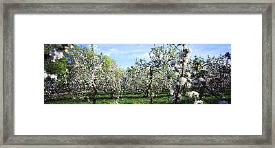 Apple Orchard, Hudson Valley, New York Framed Print
