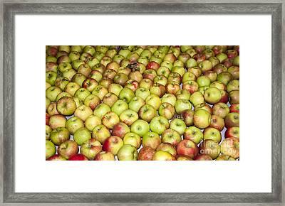 Apples Framed Print by Steven Ralser