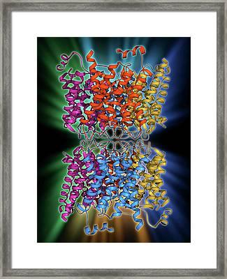 Aquaporin Membrane Protein Framed Print by Laguna Design