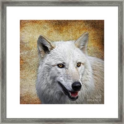 Arctic White Wolf  Framed Print by Steve McKinzie