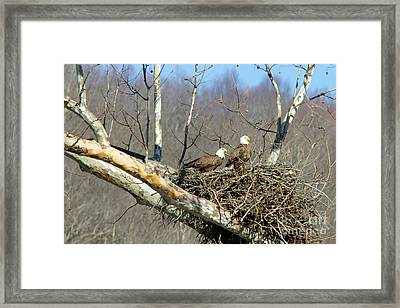Are You Listening Framed Print by Timothy Connard
