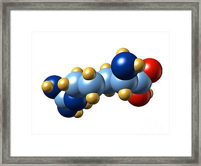 Arginine, Molecular Model Framed Print by Dr. Mark J. Winter