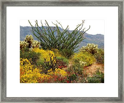 Arizona Springtime Framed Print
