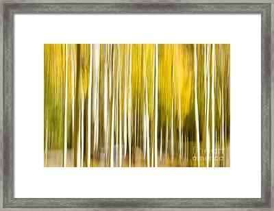 Aspen Glow Framed Print by Bryan Keil