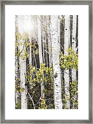 Aspen Grove Framed Print by Elena Elisseeva