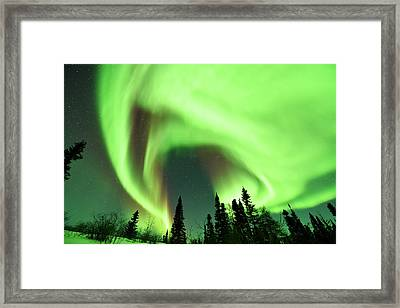 Aurora Borealis Over Trees Framed Print by Dr P. Marazzi
