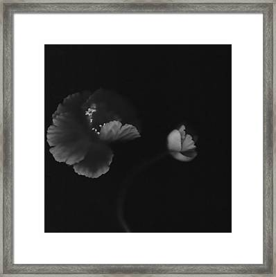 Autographic Poppies Framed Print