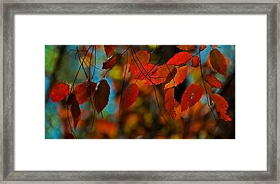 Framed Print featuring the photograph Autumn Magic by John Harding