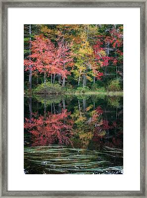 Autumn Pond Framed Print by Bill Wakeley