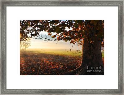 Autumn Tree Framed Print