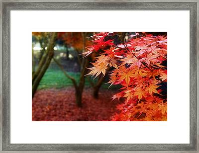 Autumnal Forest Framed Print by Les Cunliffe
