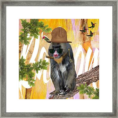 Baboon Collection Framed Print
