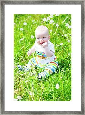 Baby Boy With Dandelions Framed Print by Wladimir Bulgar