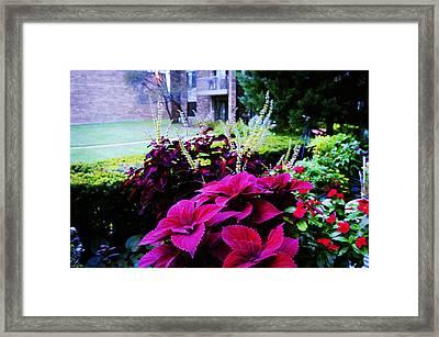 Backyard Flower Framed Print by Celestial Images