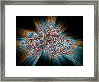 Bacterial Ribosome Framed Print by Laguna Design