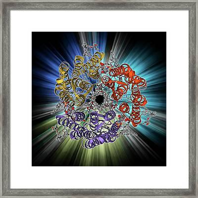 Bacteriorhodopsin Protein Framed Print by Laguna Design