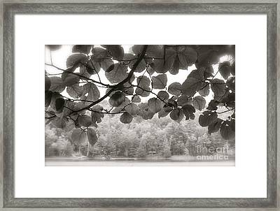 Balance Of Nature Framed Print by Paul Cammarata