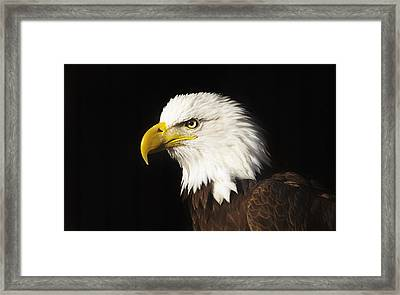 Framed Print featuring the photograph Bald Eagle  by Brian Cross