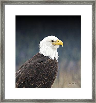 Framed Print featuring the photograph Bald Eagle by Sylvia Hart