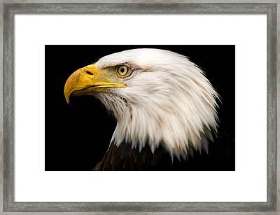 Bald Eagle Framed Print by Tracy Munson
