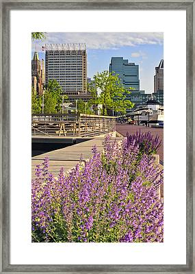Framed Print featuring the photograph Baltimore Spring Flowers by Marianne Campolongo