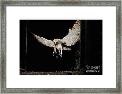 Barn Owl Framed Print by Scott Linstead