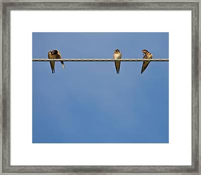 Barn Swallows Framed Print by Melinda Fawver