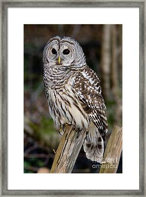 Framed Print featuring the photograph Barred Owl by Les Palenik