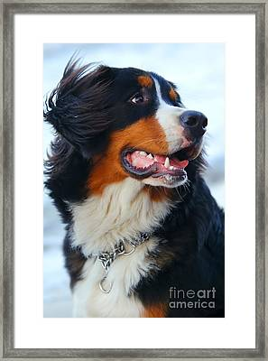 Beautiful Dog Portrait Framed Print by Michal Bednarek