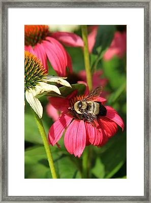 Bee Nice Framed Print by Reid Callaway