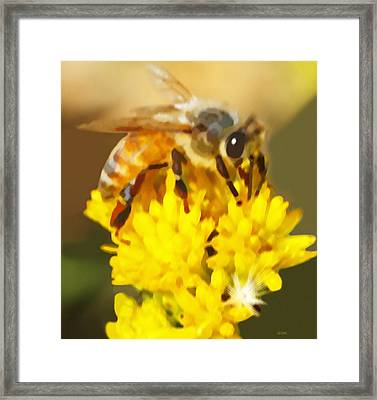 Bee On A Yellow Flower Framed Print