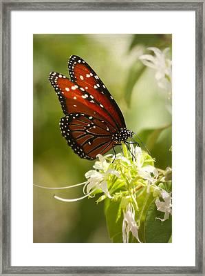 Befitting A Queen  Framed Print