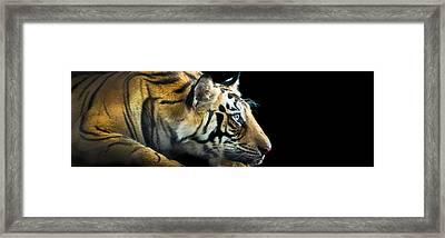 Bengal Tiger Panthera Tigris Tigris Framed Print