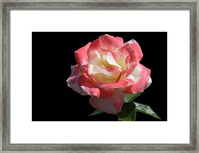 Framed Print featuring the photograph Bicolordette by Doug Norkum