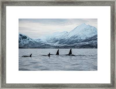 2 Big 2 Small Framed Print by By Wildestanimal