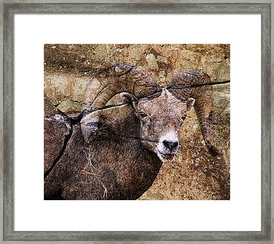 Bighorn Rock Framed Print by Steve McKinzie