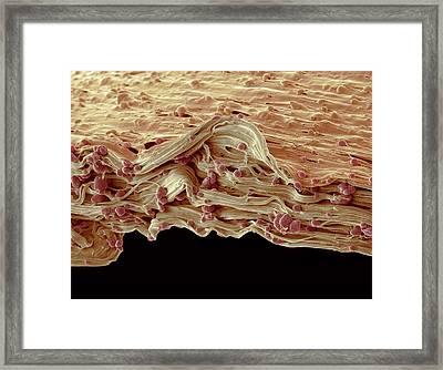 Biodegradable Carrier Bag Framed Print by Steve Gschmeissner